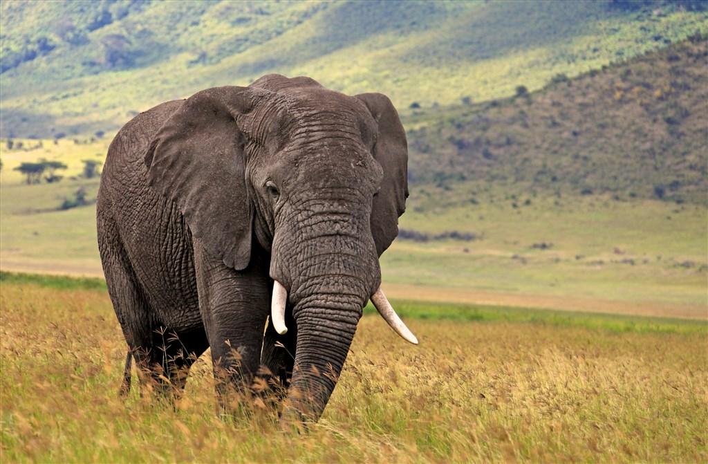 Tanzanie: dobrodružné safari s pobytem na Zanzibaru - Tanzanie
