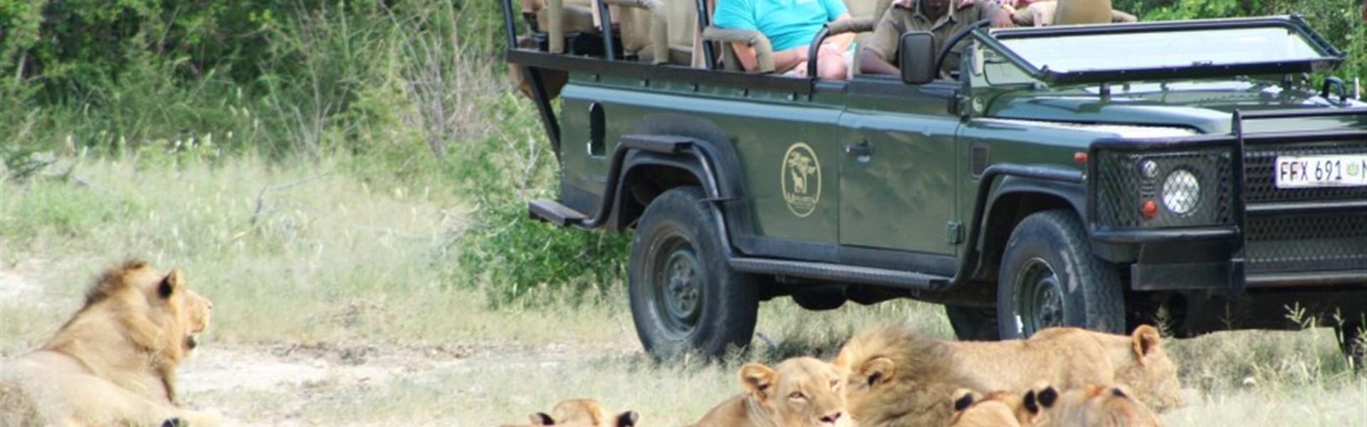 Marco Polo - Mohlabetsi Safari Lodge - V Mohlabetsi si safari opravdu užijete.