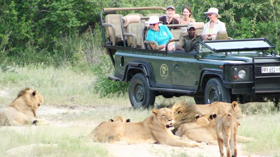 V Mohlabetsi si safari opravdu užijete.