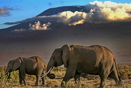 Marco Polo - Amboseli Sopa Lodge - Kilimanjaro a sloni - dvě největší atrakce Amboseli.