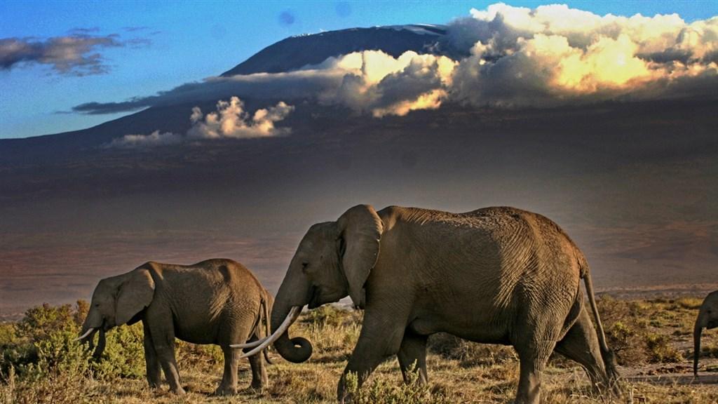 Kilimanjaro a sloni - dvě největší atrakce Amboseli.