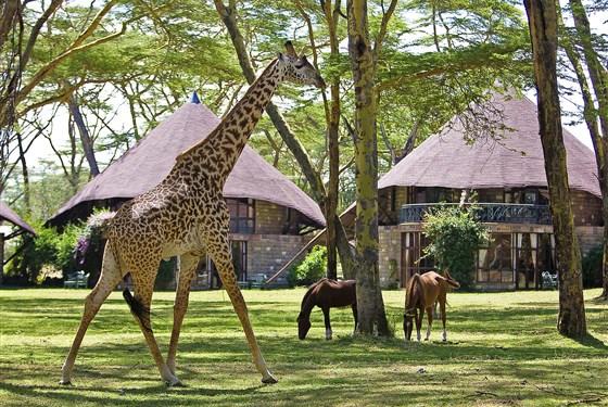 Marco Polo - Lake Naivasha Sopa Resort - Žirafy, koně a různé druhy antilop můžete vidět z bezprostřední blízkosti.