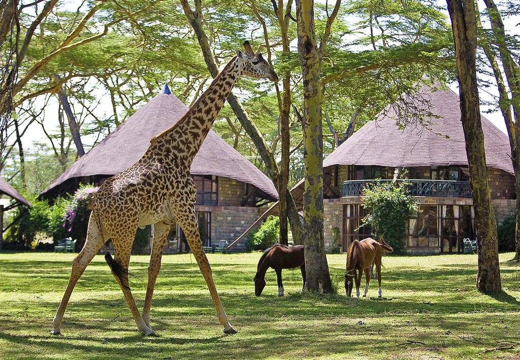 Žirafy, koně a různé druhy antilop můžete vidět z bezprostřední blízkosti.