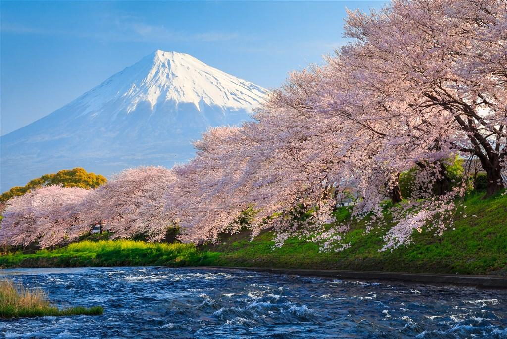 Jarním Japonskem s českým průvodcem -