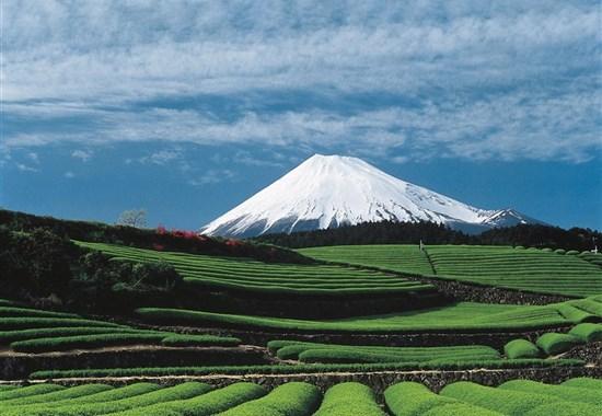 Japonsko: hledání japonské duše s českým průvodcem - Asie -