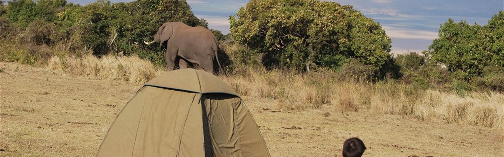 Expedice na safari do Keni a Tanzanie s českým průvodcem