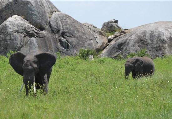 Safari okruh severní Tanzanií  + Zanzibar - Afrika