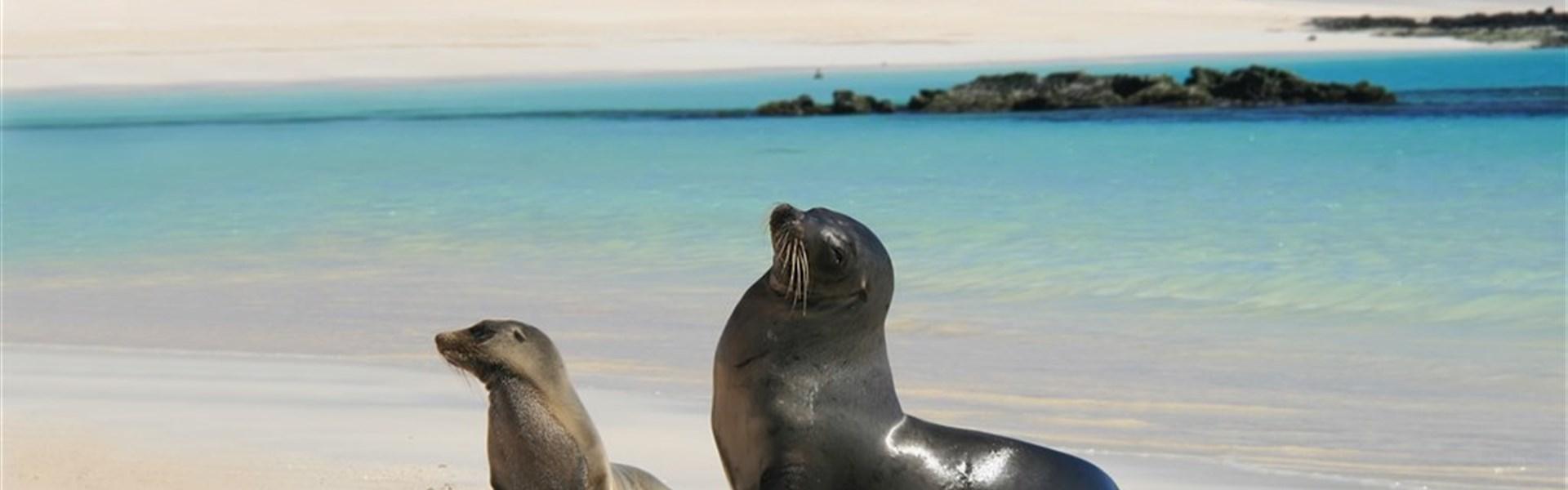 Prodloužení zájezdu do Ekvádoru o Galapágy -