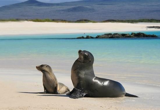 Prodloužení zájezdu do Ekvádoru o Galapágy - Jižní Amerika -