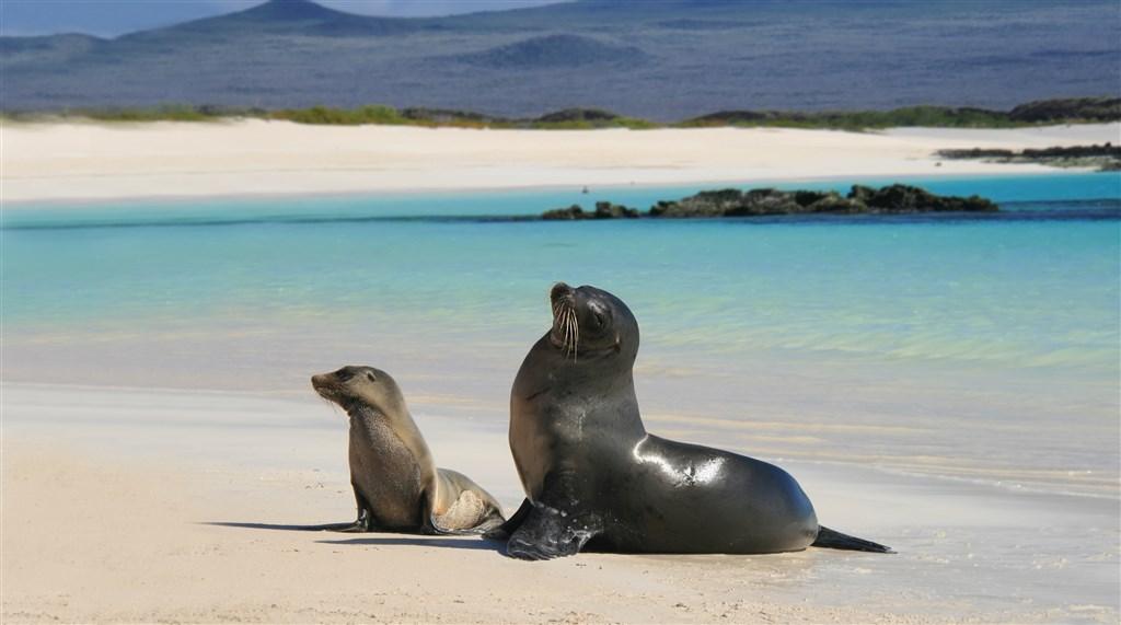 Baliček Galapágy s výletem na ostrov Isabela nebo Santa Fe - Salvador