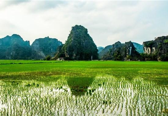 Luxusní Vietnam - Od severu k jihu a pobyt u moře -  - Vietnam - Ninh Binh - rýžové pole.jpg