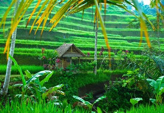 Poznávací zájezd - Dobrodružné Bali a Jáva s českým průvodcem - Indonésie -