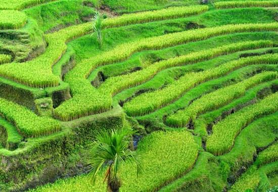 Jóga na Bali s českou lektorkou - Indonésie -