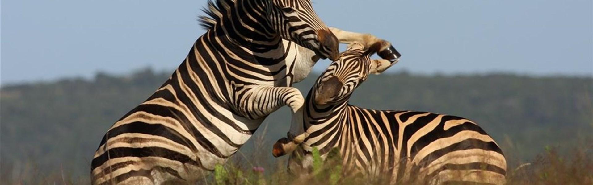 Safari v Keni + prodloužení u moře all inclusive -