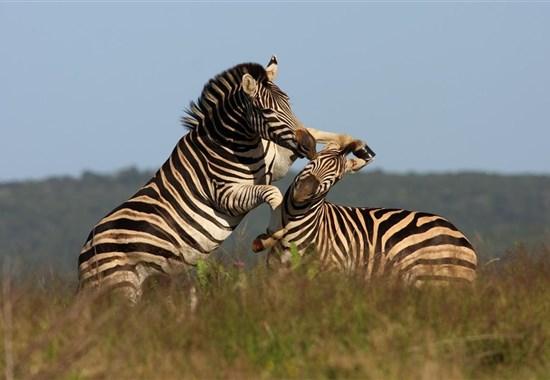 Safari v Keni + prodloužení u moře all inclusive - Keňa