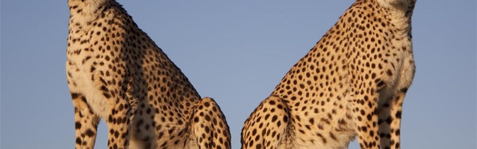 Safari v Keni - dva dny v NP Tsavo -