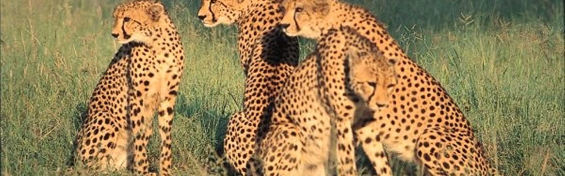 Safari v Keni - To nejlepší z Keni -