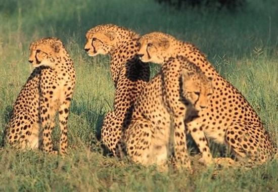 Safari v Keni - To nejlepší z Keni - Keňa -