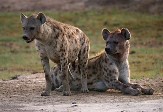 Dovolená na safari v Keni a pobyt u moře - 4 noci safari a 6 nocí u moře.Český průvodce. - Afrika - Safari v Keni s Marco Polo_Amboseli