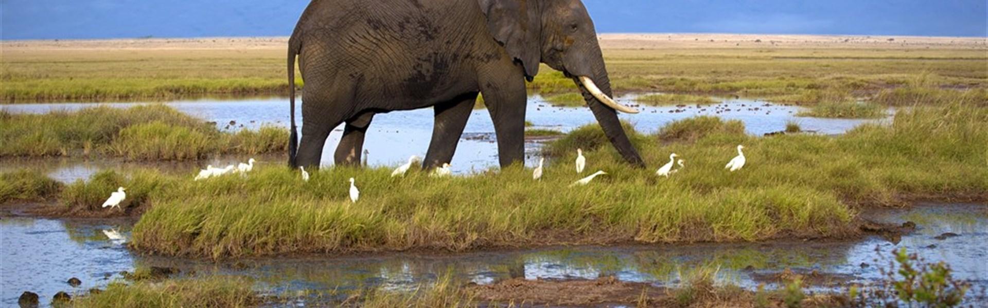 Safari ve stínu Kilimanjara a pobyt u moře na Diani Beach - Safari v Keni s Marco Polo_Amboseli