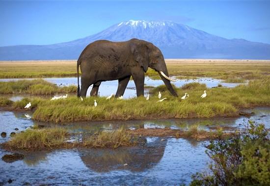 Safari ve stínu Kilimanjara a pobyt u moře na Diani Beach - Keňa