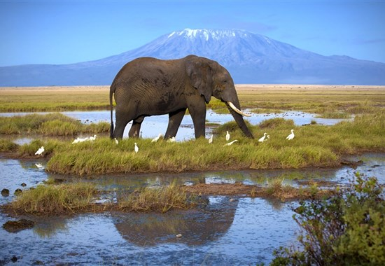 Safari ve stínu Kilimanjara a pobyt u moře na Diani Beach - Amboseli - Safari v Keni s Marco Polo_Amboseli