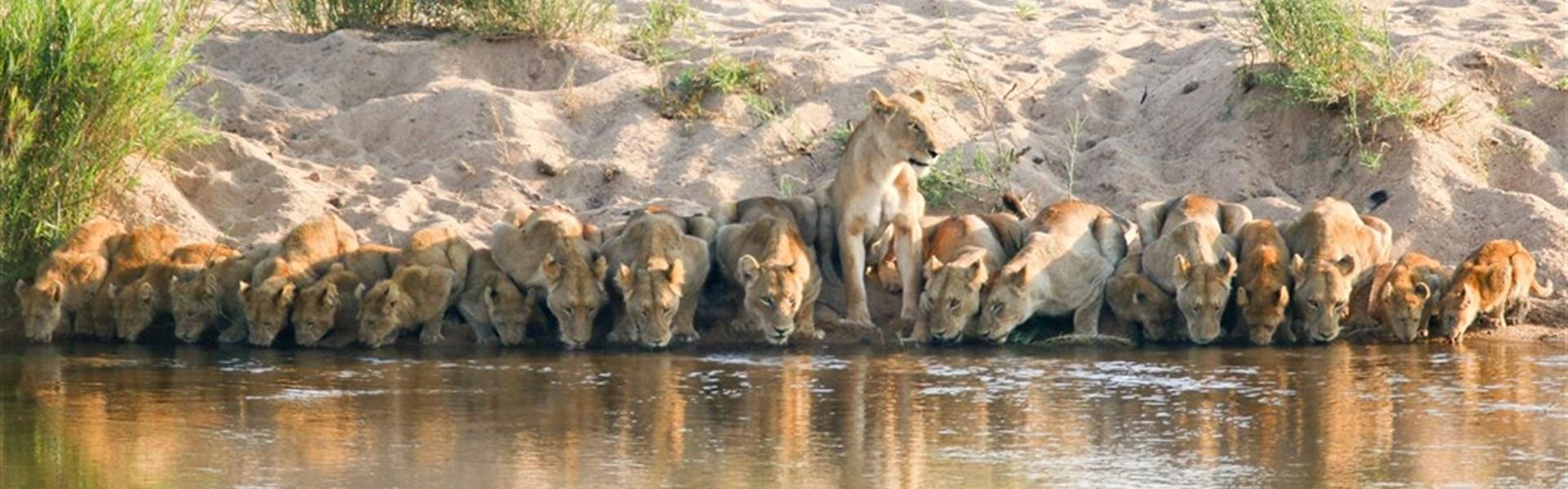 Po vlastní ose - Luxusní safari v Krugerově národním parku - Safari v Krugerově národním parku s Marco Polo