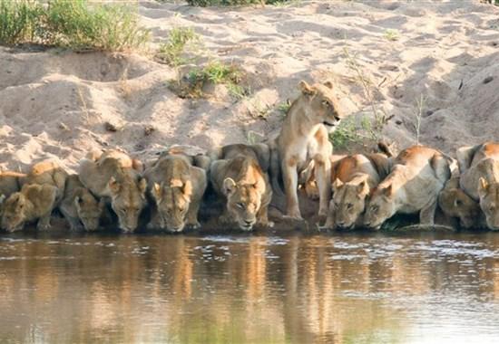 Po vlastní ose - Luxusní safari v Krugerově národním parku -  - Safari v Krugerově národním parku s Marco Polo