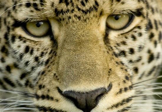 Safari v Tanzanii - Klenoty severní Tanzanie s českým průvodcem - Afrika
