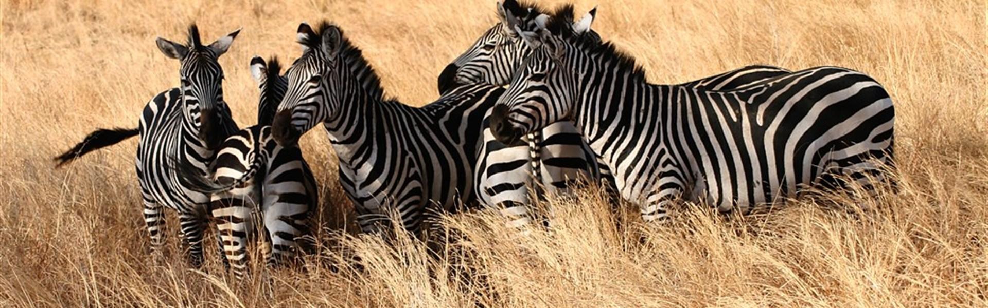 Safari v Tanzanii + Zanzibar -