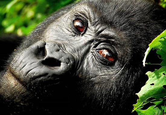 Safari v Ugandě - Objevte nebroušený diamant Afriky - Afrika