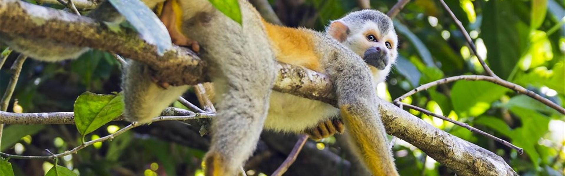 Poznávací zájezd pro rodinu (2+2) - Kostarika jako na dlan -