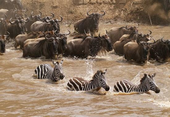 Safari v Keni - Za Velkou migrací a odpočinkem u moře -  -