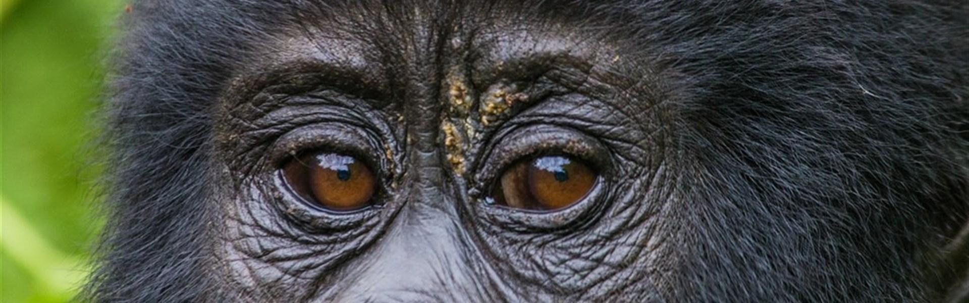 Safari v Ugandě - Cesta za gorilami s českým průvodcem -