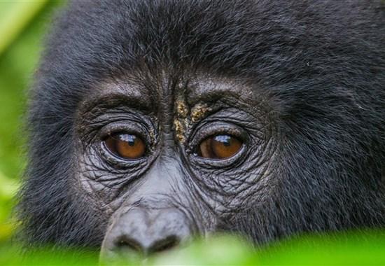 Safari v Ugandě - Cesta za gorilami s českým průvodcem - Afrika