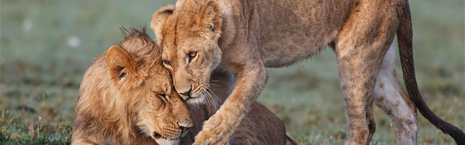 Safari v Keni s prodloužením u moře -