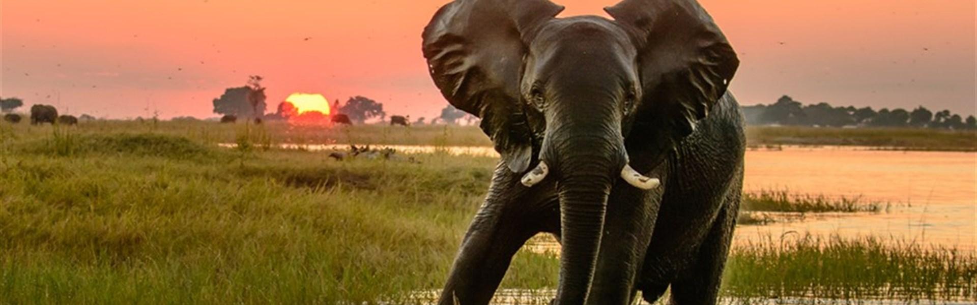 Dobrodružství v Botswaně s anglickým průvodcem -
