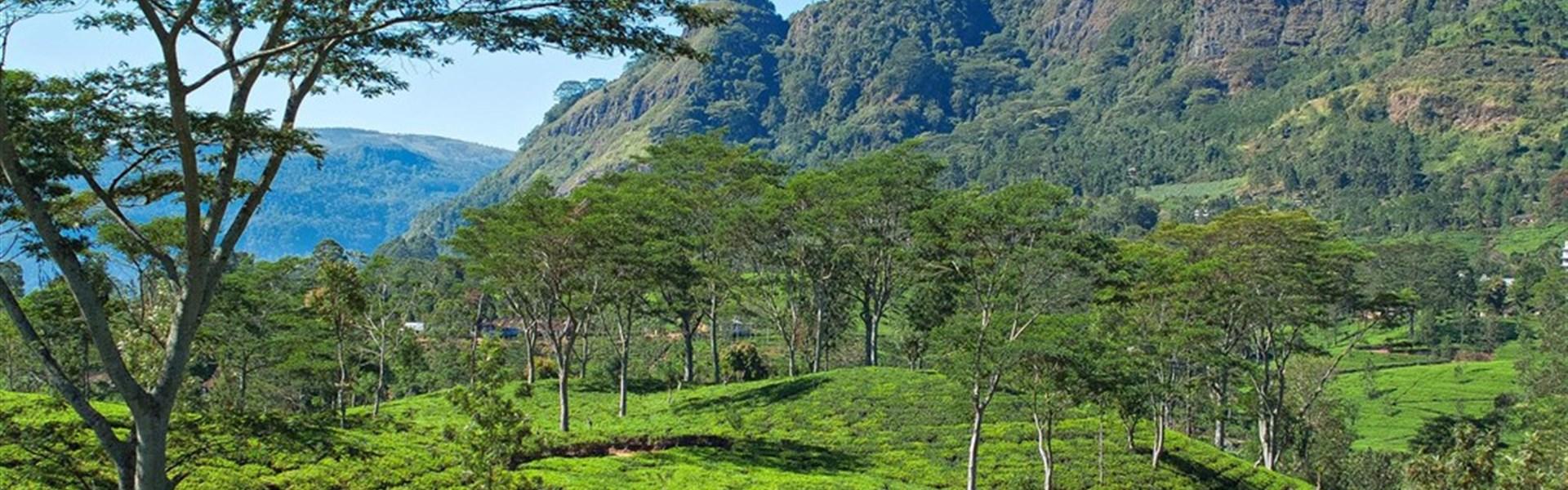 Esence Srí Lanky - Exotický Cejlon s českým průvodcem - Čajové plantáže