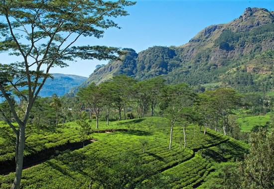 Esence Srí Lanky - Exotický Cejlon s českým průvodcem -  - Čajové plantáže