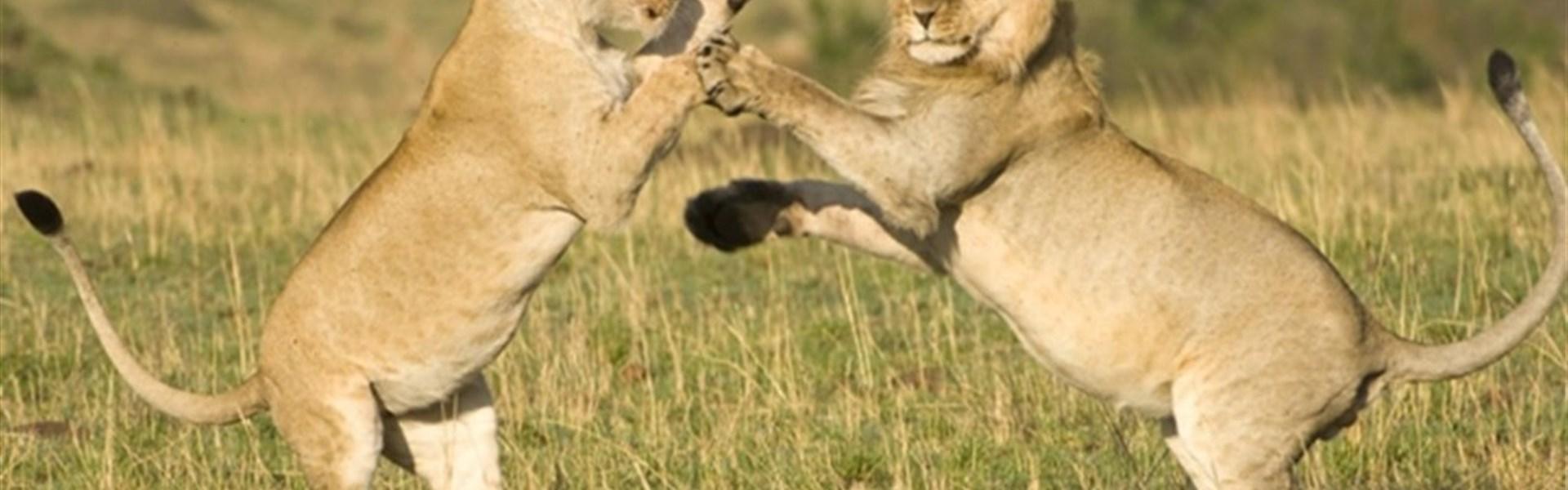 Safari v Tanzánii - Ngorongoro a Serengeti -