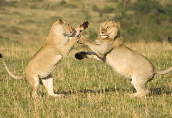 Safari v Tanzánii - Ngorongoro a Serengeti - Serengeti -