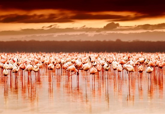 Tanzanie -  plameňáci u jezera Natron a mnohem více - Afrika