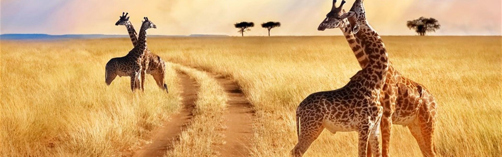 Safari v Tanzánii - Tarangire, Ngorongoro, Serengeti -  s českým průvodcem -