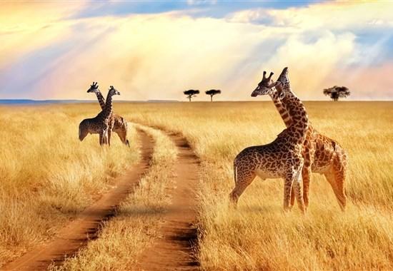 Safari v Tanzánii - to nejlepší ze severní Tanzánie s českým průvodcem -  -