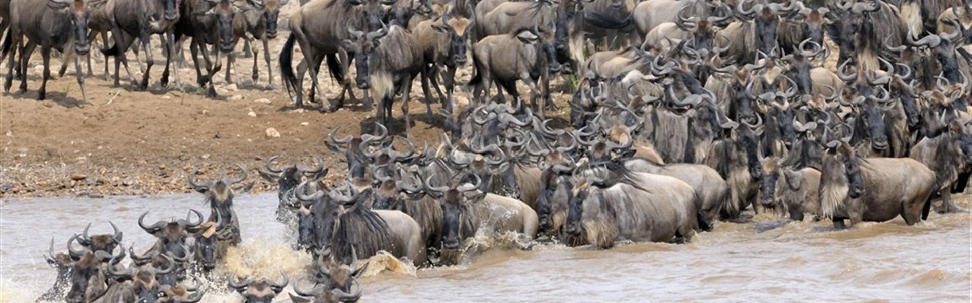 Safari v Keni - Velká migrace -