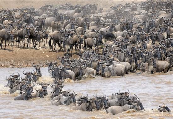 Safari v Keni - Velká migrace - Keňa