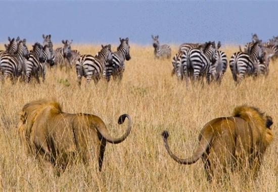 Aktivní Keňa s českým průvodcem - Afrika -