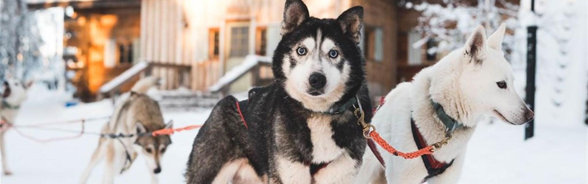 Zimní Helsinky a Polární Kruh - vlakem i s psím spřežením - Zimní Helsinky a Polární Kruh - letecky, vlakem i s psím spřežením