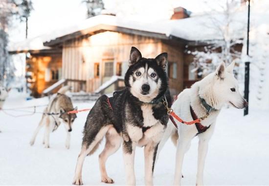 Zimní Helsinky a Polární Kruh - vlakem i s psím spřežením -  - Zimní Helsinky a Polární Kruh - letecky, vlakem i s psím spřežením