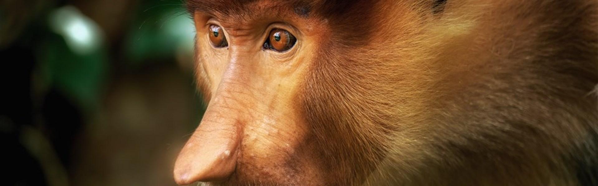Foto expedice Borneo -